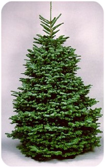 Harvey's Harvest Christmas Trees