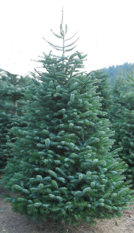 Harvey S Harvest Christmas Trees